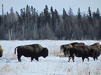 Manitoba Protected Areas